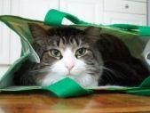 Annex Cat Rescue Newsletters