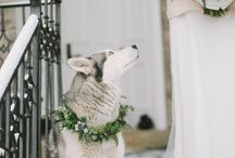 Winter Weddings with Pets / Pets that have been included in beautiful winter weddings.