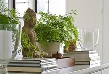 Hogar Feng Shui / Decoración, objetos, plantas, ambientación, Feng Shui, colores, texturas, formas y mas !