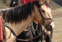 L'Andin / L'Andin est un type de Criollo Argentin que l'on trouve au Pérou Les races du Pérou . Comme la plupart des autres races d'Amérique latine, il est issu des chevaux espagnols des conquistadores, et s'est adapté à l'environnement et au climat des Andes et à la vie en haute montagne.