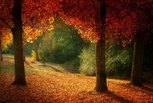 Autumn / by Gracjana Roszkowska