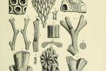 inspirations crustacés