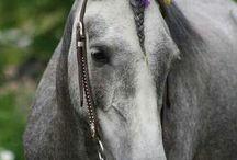 Trenzas para los caballos