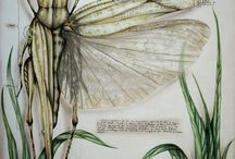Insects: Art