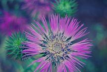 Flowers / fiori