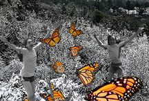 Monarch Butterfly Migrations / Eco mystery for upper elementary and middle grades, The Adventures of the Sizzling Six: Monarch Mystery by Claire Datnow (Book 6) www.mediamint.net