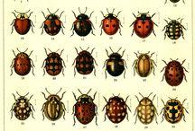 Ladybug Emblema