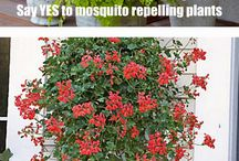 Mosquito Repellant / by Sophie Sanders