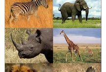 zoo -exoticke zvierata