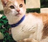 Adoptable Fiv+ Cats