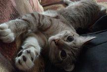 bebe meow bebe