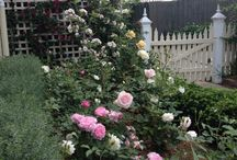 Akemi Gardens Living Designs / Here are some pictures of some of the gardens I have designed. Lisa Harper of Akemi Gardens Melbourne Victoria / by Akemi Gardens