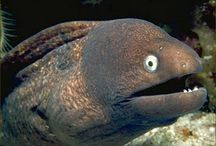 Moray eels find out that Kevin Spacey was Keyser Söze