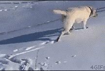 háziállat