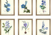 Botanische bloemen