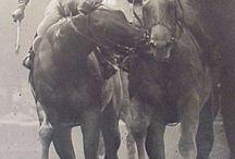 Famous racehorses / by Kayla Letham