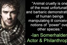 People against Animal Cruelty