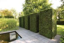 Hedges  / by Akemi Gardens