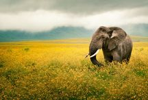 National Geographic / #animals #verdevivo.org #nature