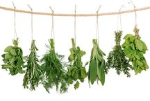Herbs / Anything About herbs