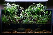 rożliny wychodzące z akwarium