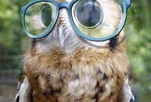 Pets in Specs / Does your furry friend need specs? If only!