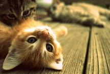 Kitties! / by Lexi Meyer