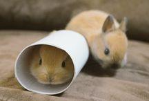 Rabbits/bunnies