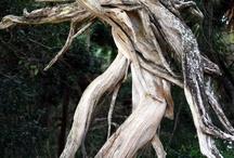 Projekt alter Nussbaum