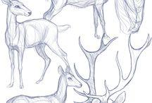 ciervos y similares