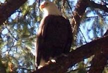 Birding in Plumas County / by Plumas County Tourism