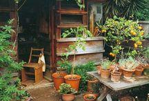 dream x garden