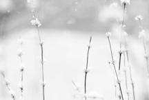 il papavero | white