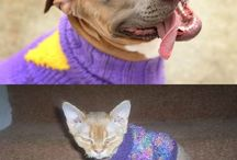 differences between dogs and cats :D