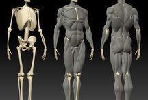 Art - skeletons etc