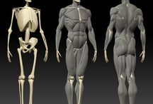 szkielet i miesnie