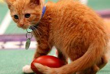 Hallmark Kitten Bowl / by Donna M. Cervelli