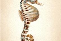 hipocamp