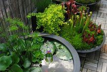 mini watergarden