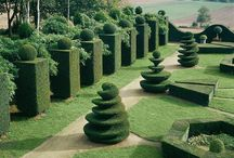 Topiary / Hedge cut