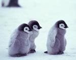Too cute / by Alyssa Petruzzello