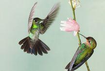Birds / by Mayra van Hooydonk