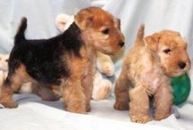 Our dog on the right when he was a puppy