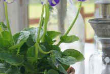 Krukväxter utomhus