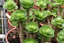 Succulents & Drought-Resistant Plants