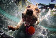 Pet Photography / by Wendy Burkett
