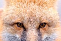 Beautiful creatures / Amazing animals