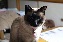 リーヤとポコ / 猫のリーヤ、ミックス犬のポコ 2匹の写真