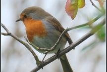 bird watching / by Tina Brown