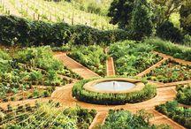 composition of the garden